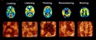 MRI mages of a human brain during different mental activiies (top). Similar evolving patterns have been generated on the molecular monolayer (bottom). (Anirban Bandyopadhyay)