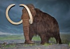 Woolly_Mammoth-RBC