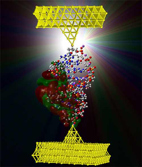 The A-form of DNA between two electrodes. (credit: UC Davis)