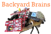 Affordable neuroscience kits for students of all ages