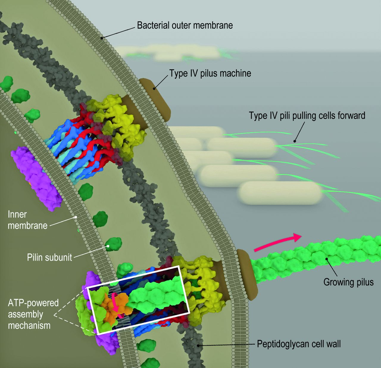 An astounding nanoscale magnified view of bacterial 'motors'