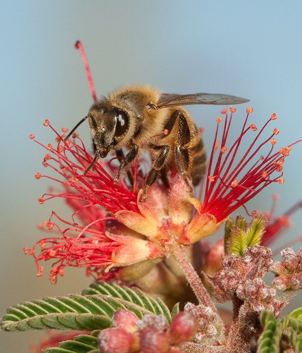 Bee on flower_1