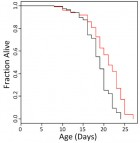 Ibuprofen extends the lifespan of C. elegans worms: survival curves treated with ibuprofen at 0.1 mM (red) compared to experiment-matched untreated (credit: Chong He et al./PLOS Genetics)