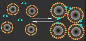 "Magnetic calcium-responsive nanoparticles (dark centers are magnetic cores) respond within seconds to calcium ion changes by clustering (Ca+ ions, right) or expanding (Ca- ions, left), creating a magnetic contrast change that can be detected with MRI, indicating brain activation. (High levels of calcium outside the neurons correlate with low neuron activity; when calcium concentrations drop, it means neurons in that area are firing electrical impulses.) Blue: C2AB ""molecular glue"" (credit: The researchers)"