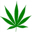 Cannabis leaf (credit: Wikimedia Commons)