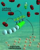 Nanoengineers have invented tiny tube-shaped micromotors that zoom around in water and efficiently remove carbon dioxide. The surfaces of the micromotors are functionalized with the enzyme carbonic anhydrase, which enables the motors to help rapidly convert carbon dioxide to calcium carbonate. (credit: Laboratory for Nanobioelectronics, UC San Diego Jacobs School of Engineering)