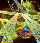 The DNA gel is composed of stiff DNA nanotubes connected to each other via long, flexible DNA linkers. A motor protein, FtsK50C, binds to special sites on the linkers. When ATP, a biochemical fuel, is allowed to permeate the gel, the motor molecules reel in the linkers to which they are bound, drawing nanotubes together, and stiffening the gel. (Credit: Peter Allen/UCSB)