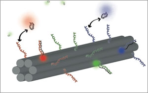 DNA Barcode Nanotube
