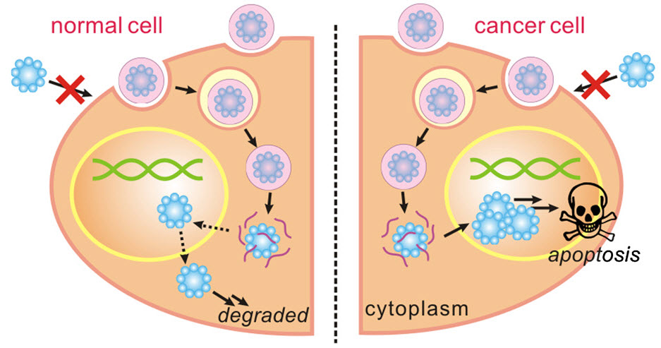 Cells in breast cancer