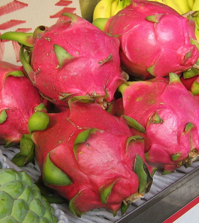 Dragonfruit (credit: Wikimedia Commons)