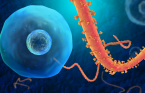 The Ebola virus. (credit: iStock)