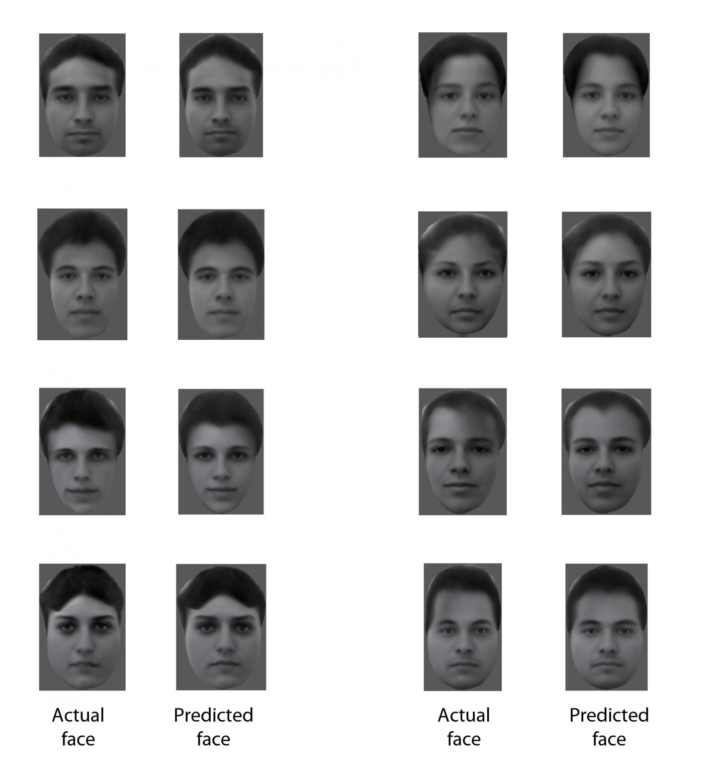 Facial Reconstruction The Brain Artificial Intelligence Can Now Decipher