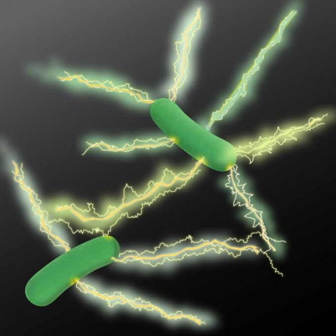 "An artist's rendition of Geobacter expressing electrically conductive nanowires. Microbiologists at UMass Amherst have discovered a new type of natural wire produced by bacteria that could greatly accelerate the development of sustainable ""green"" conducting materials for the electronics industry. (credit: UMass Amherst)"