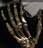 Skeletal fossil of the hand of Homo naledi (photo credit: John Hawks, UW–Madison)