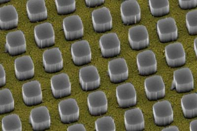 Silicon pillars emerge from nanosize holes in a thin gold film. The pillars funnel 97 percent of incoming light to a silicon substrate, a technology that could significantly boost the performance of conventional solar cells. (credit: Vijay Narasimhan, Stanford University)