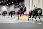 MIT researchers have trained their robotic cheetah to see and jump over hurdles as it runs — making this the first four-legged robot to run and jump over obstacles autonomously (credits: Haewon Park, Patrick Wensing, and Sangbae Kim)