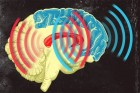 MIT neuroscientists found that brain waves originating from the striatum (red) and from the prefrontal cortex (blue) become synchronized when an animal learns to categorize different patterns of dots (credit: Jose-Luis Olivares/MIT)