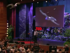 Markus Fischer robot flies like bird