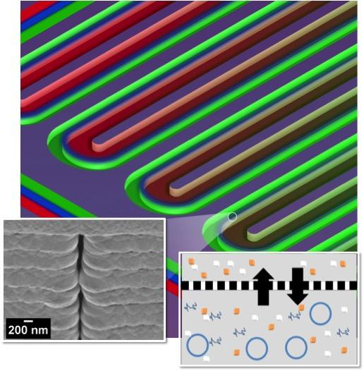 This section of a serpentine channel reactor shows the parallel reactor and feeder channels separated by a nanoporous membrane. At left is a single nanopore viewed from the side; at right is a diagram of metabolite exchange across the membrane. (credit: ORNL)