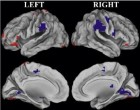 When middle-aged and older adults were shown a series of faces, red regions of the brain were more active; these include an area in the medial prefrontal cortex that is associated with self-referential thinking. In young adults, by contrast, blue regions -- which include areas important for memory and attention -- were more active during this task. (credit: N. Rajah, McGill University)
