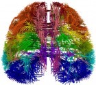 A top-down 3-D view of the cortico-connections originating from multiple distinct cortical areas, visualized as virtual tractography (credit: Allen Institute for Brain Science)