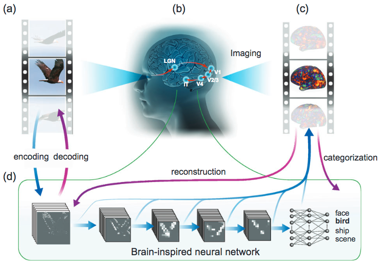 Researchers watch video images people are seeing, decoded from their fMRI brain scans in near-real-time