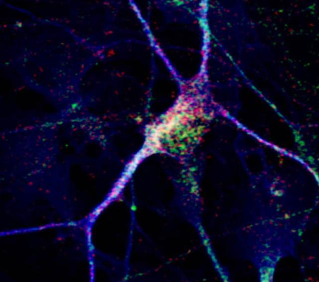informative paper on neurons