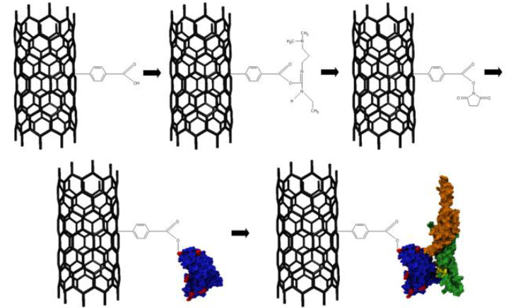 functionalization of multiwalled carbon nanotubes The reaction of thin multiwalled carbon nanotubes with a mixture of concentrated hno3 and h2so4has been studied by ir absorption and x-ray photoelectron spectroscopies.