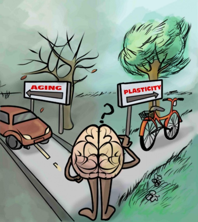 """This is an artistic representation of the take home messages in Lunghi and Sale: """"A cycling lane for brain rewiring,"""" which is that physical activity (such as cycling) is associated with increased brain plasticity. (credit: Dafne Lunghi Art)"""