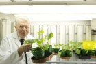 Professor Ted Cocking from University of Nottingham with a plant grown using nitrogen fixation N Fix technology