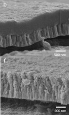 The top scanning electron microscope image (b) shows a cross section of the bioactive hydroxyapatite/YSZ coating without heat treatment. Note how the two layers are distinct. The bottom image (f) shows the coating after heat treatment. Note how the layers are now integrated. (Credit: Rabei )