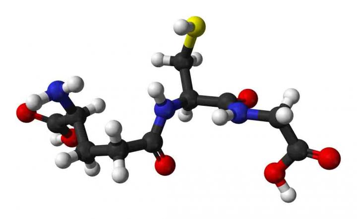 Boosting levels of antioxidant may help resist age-related decline