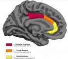 Three cingulate ROIs. Medial ROIs of the cingulate cortex in the Desikan-Killiany (Desikan et al., 2006) cortical labeling protocol are color-coded with their corresponding parcellations characterized by Vogt (2009). (Credit: Tamar Gefen et al./The Journal of Neuroscience)
