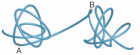 Schematic illustrating topological domains and resulting directional bias (