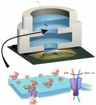 Illustration depicting biocell attached to CMOS integrated circuit with membrane containing sodium-potassium pumps in pore (credit: Trevor Finney and Jared Roseman/Columbia Engineering)