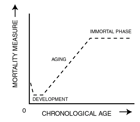 How to achieve 'biological immortality' naturally | Kurzweil