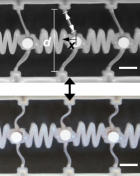 The SEAS/Caltech system for transmitting a mechanical signal consists of a series of bistable elements (the vertical beam, d, shown here) connected by soft coupling elements (wiggly lines), with two stable states. (Top) When a beam is displaced (by amount x), it stores energy. (Bottom) When it snaps back, it releases that stored energy into the coupling element on the right, which continues down the line. (Scale bars represent 5 mm.) (credit: Jordan R. Raney/PNAS)
