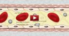 blood_brain_barrier_video