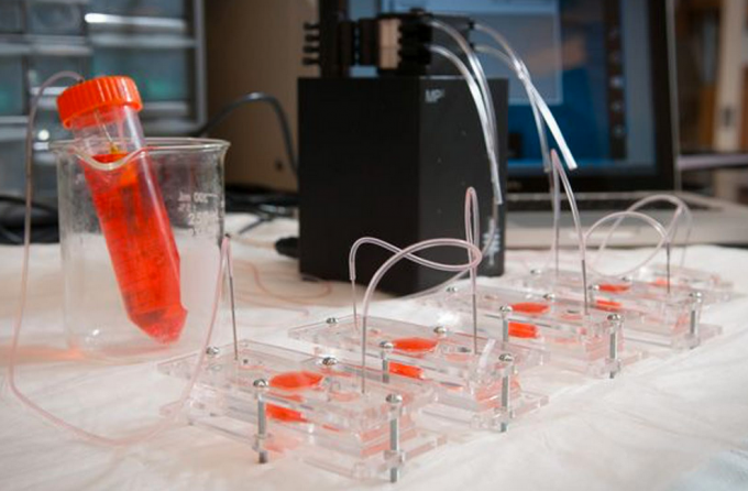 "Scientists created miniature models of hearts, lungs, and livers and combined them into an integrated ""body-on-a-chip"" system, fed with nutrient-rich fluid to mimic blood (credit: Wake Forest Baptist Medical Center)"