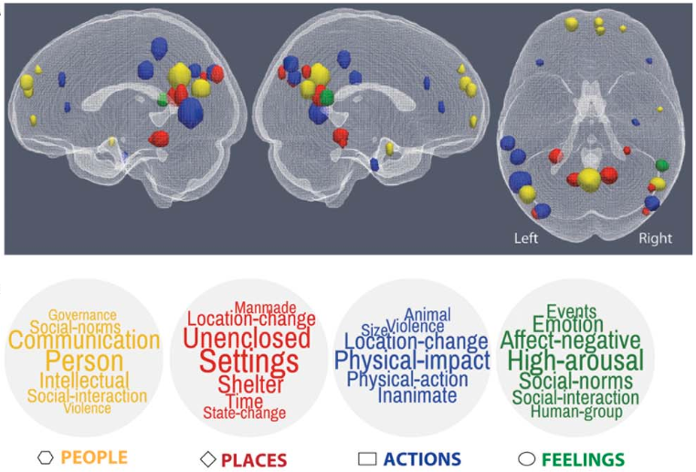 Brain Representations Of Social >> Mind Reading Technology Identifies Complex Thoughts Using Machine