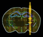 """Artistic rendition of an ultrasound pulse being transmitted into intact brain circuits (William """"Jamie"""" Tyler)"""