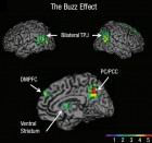 Psychologists report for the first time that the temporoparietal junction (TPJ) and dorsomedial prefrontal cortex (DMPFC) brain regions are associated with the successful spread of ideas, often called 'buzz' (credit: UCLA)
