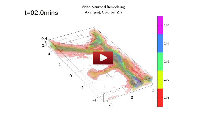 epfl_neuron_video