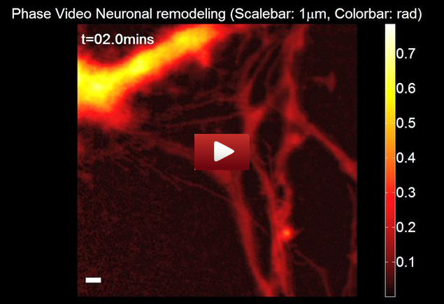 epfl_neuron_video_1