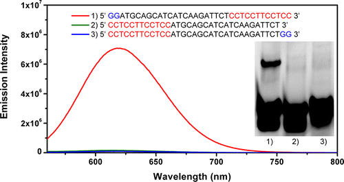 glowing_dna_nanoclusters