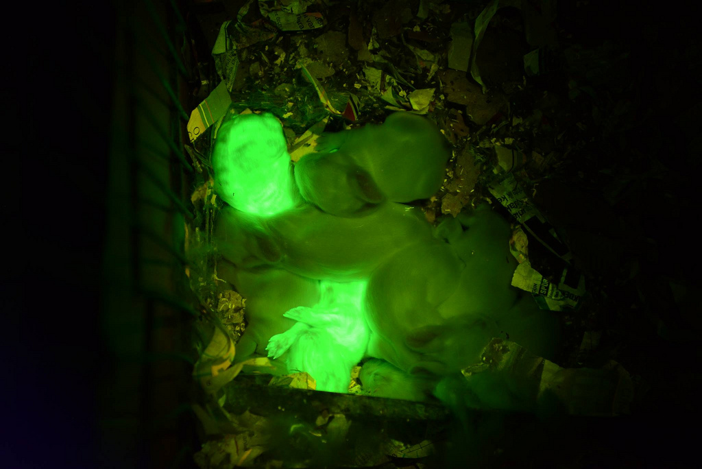green_glowing_rabbits