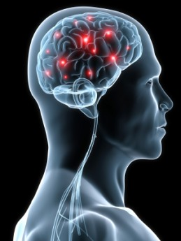 Can a protein called SIRT1 in your head boost brain power, learning and memory?
