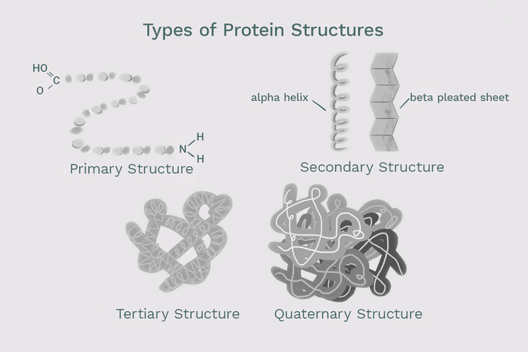 digest | Early Evidence: linking deformed proteins with