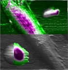 Living cells at the nanoscale