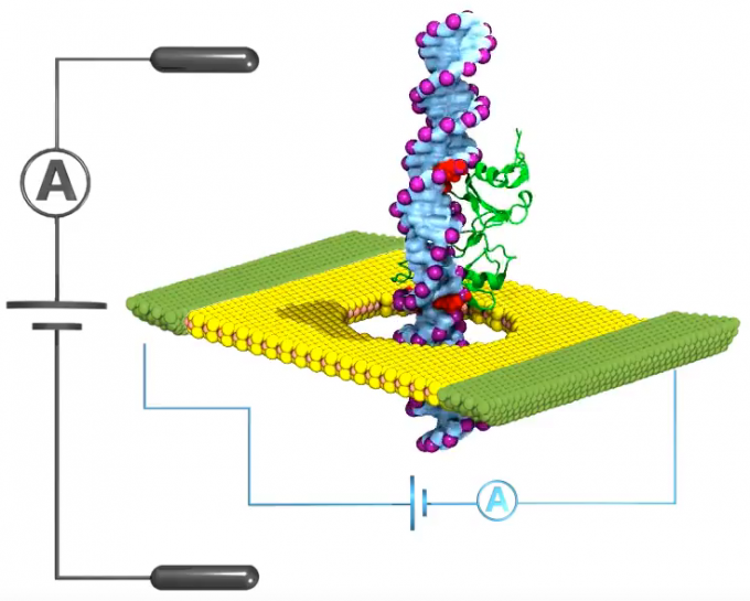 Nanopore cancer detection. To detect DNA methylation changes (for cancer early warning), researchers punched a tiny hole (pore) in a flat sheet of graphene (or other  2D material). They then submerged the material in a salt solution and applied an electrical voltage to force the DNA molecule through the pore. A dip in the ionic current (black A) identified a methyl group is passing through, but a dip in the electrical current (blue A) could detect smaller DNA changes. (credit: Beckman Institute Nanoelectronics and Nanomaterials Group)